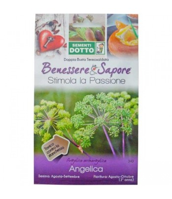 Angelica - Sementi Dotto