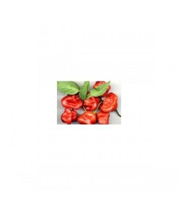 Pinzon - Semi di Peperoncino