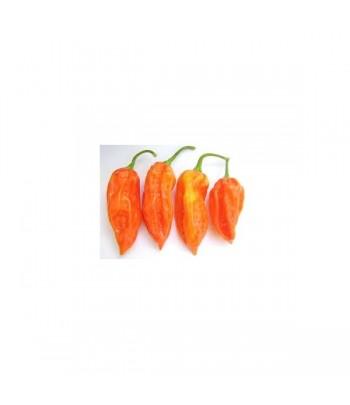 Bhut Jolokia Peach - Semi...