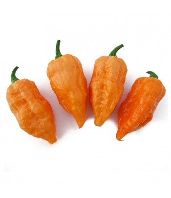 Orange Bhut (Bih) jolokia -...