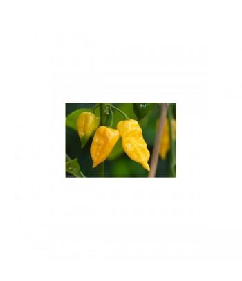 Habanero Hot Lemon - Semi...