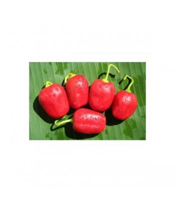 Rocoto Manzano Rojo -Semi...