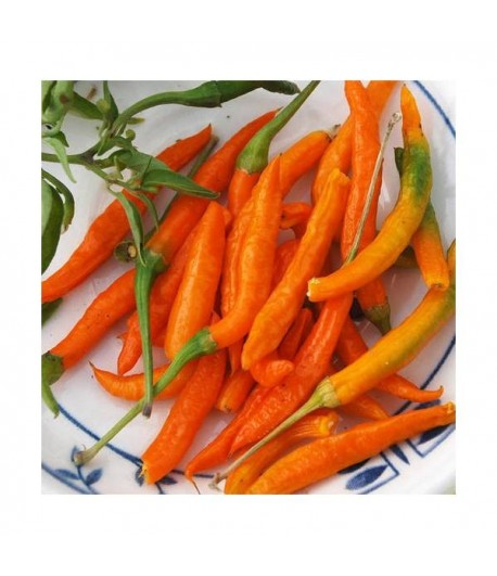 Thai orange hot - Semi di Peperoncino