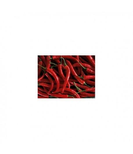 Thai red hot - Semi di Peperoncino