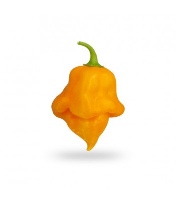 Trinidad Scorpion Orange -...