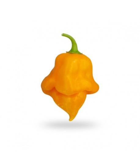 Trinidad Scorpion Orange - Semi di Peperoncino